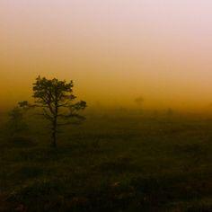 Sunny fog. Luckily so we can't see disturbed nature in Sykkylven by #statkraft #heiane #grebstadsætra #ilovenorway #ilovenorway_møreogromsdal