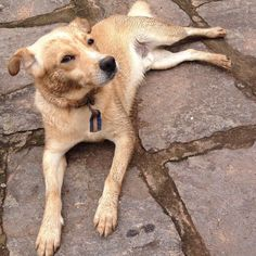 Oh no!!!!! Where have you been Cachorrinho???!!!  #labrador #mutt #dirtydog #ilovemydogs #casanocampo #riointerior #miguelpereira #errejota #BalaiodeEstiloS