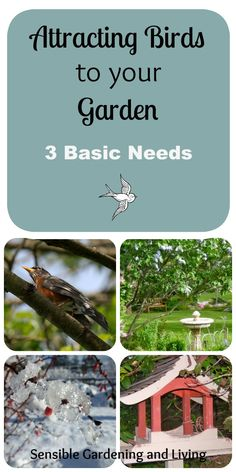 Attracting Birds to your Garden with Sensible Gardening and Living