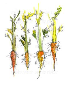 Carrots Vegetable Illustration PDF Instant Digital by meadowblooms, $10.00