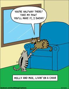 I love cat's & Bon Jovi! Cat Jokes, Funny Animal Memes, Funny Animal Pictures, Funny Animals, Cat Humour, Funny Photos, Crazy Cat Lady, Crazy Cats, Cat Comics