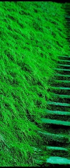 Green steps : so peaceful