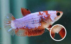 Pin Di Info Ikan