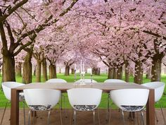 Dining Room with Cherry Blossom Photo Wall Mural