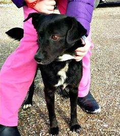 Adopt Dogs Windsor Ontario