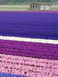 #flower #spring