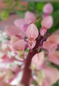 Kirjoitan blogia luonnossa liikkumisesta kaikin aistein, sekä jaan luontovalokuviani osoitteessa www.zirbaslife.simplesite.com