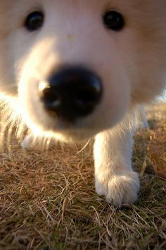 Nose in Camera by emblita, via Flickr
