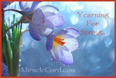 Yearning for spring! MiracleCord.com