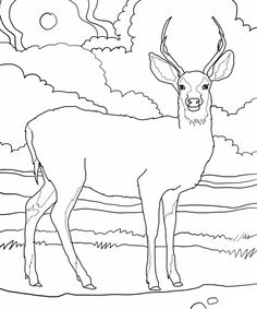 This provides ample opportunities for the kids to experiment with various shades while filling in the deer coloring pages. Description from bestcoloringpagesforkids.com. I searched for this on bing.com/images