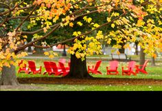 red chairs in the fall