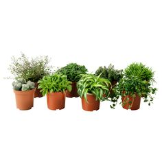 """HIMALAYAMIX Potted plant, assorted species plants $2.49 Article Number:201.972.27 Read more Size 4"""""""