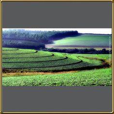 Plantação de soja - SC