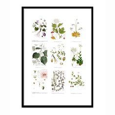 Nordens flora taulu Smia - Osta kalusteita verkossa osoitteessa ROOM21.fi