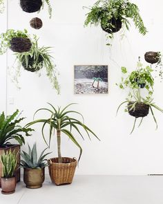 A mix of hanging Kokedama and potted houseplants brings a stark corner space to life - Loose Leaf's studio via The Design Files