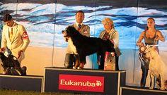 Frankie questa sera esagera e vince il gruppo 2  www.amicidizoe.com
