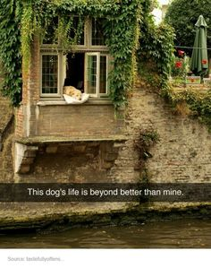 I've actually seen this dog! He hangs out the window every day! He's in Brussels among the gorgeous waterways