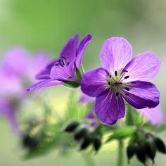 Purple by *Angie-Pictures on deviantART...simple, but pretty!