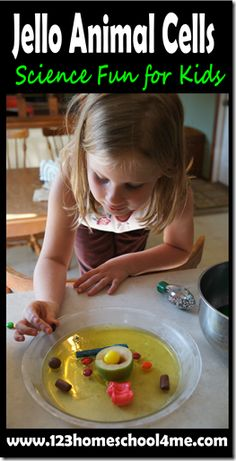 Jello Animal Cells - More directions and links. Great hands on #science for #homeschoolers #biology