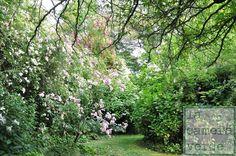 Valleranello, giardino di rose