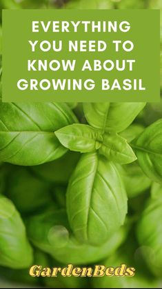 Vertical Vegetable Gardens, Home Vegetable Garden, Regrow Vegetables, Growing Vegetables, How To Trim Basil, Garden Plants, Herb Gardening, Indoor Gardening, Indoor Plants