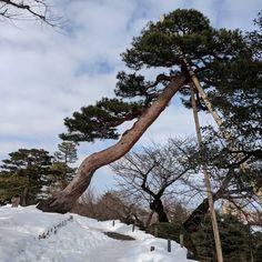 die 674 besten bilder von japanese niwaki bonsai trees bonsai bonsai trees und landscaping. Black Bedroom Furniture Sets. Home Design Ideas