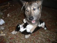 Кошка и Собака