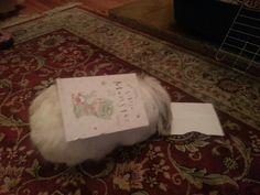 Happy Birthday Bunny Mupp, 2 today xxx