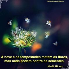 Elaine Moraes Passos jakoi käyttäjän Conceição... https://www.facebook.com/ElainedeMoraesPassos/posts/968583299924388