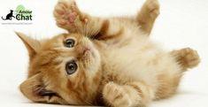 Bébé chat : le top 10 des chatons les plus mignons au monde