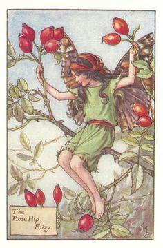 http://www.wellandantiquemaps.co.uk/lg_images/The-Rose-Hip-Fairy.jpg