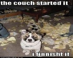 Funny Animals with Captions | View All - Funny Animal Pictures With Captions - Very Funny Cats ...