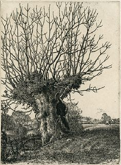 stanley roy badmin - the old ash, 1929, etching.
