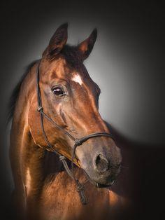 beautiful brown horse. @Yves Bonis Rocher USA and #MakeUpDaysUSA