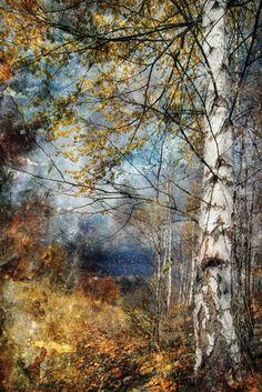 1X - kootenay fall by Ursula Abresch