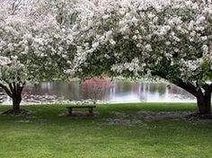 Весна/Spring - Цветущие деревья - The Best Photos