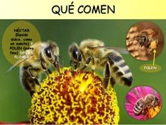 Las abejas para Educación Infantil Bee Happy, How To Speak Spanish, Interactive Notebooks, Bee Keeping, Activities, Projects, Smile, Vegetable Garden, Bee Hives
