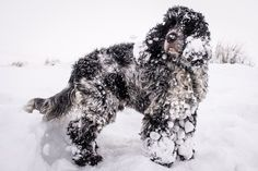 Snowy scenes across Britain – in pictures