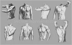 Anatomical Study: Torso by Spectrum-VII.deviantart.com on @DeviantArt