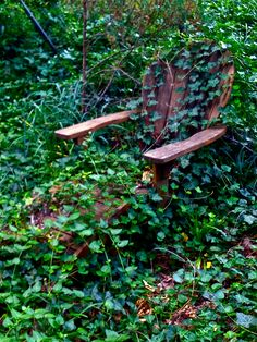 The chair is being reclaimed by nature