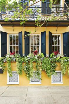 Container Gardens: Sweeping Vines Window Box Trio