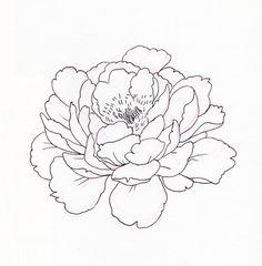 "Képtalálat a következőre: ""peony png"" Peony Drawing, Floral Drawing, Drawing Sketches, Art Drawings, Flower Line Drawings, Simple Line Drawings, Painting Inspiration, Art Inspo, Botanical Drawings"