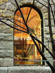 Last leaves outside Boylston Hall in Harvard Yard.