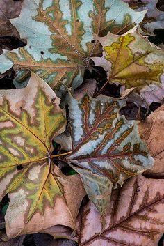 Leaves by Janet Little Jeffers