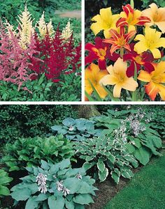 Perennial Shade Flowers Collection
