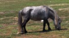 Horses For Sale and Equine For Sale