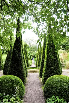 Wollerton Hall. The Well Garden with a dozen of very well shaped, spiky, Yew Pyramids.