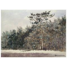 Scots pine  - Grove den  Watercolor & gouache, 10.5x14.5 inches June 2016 Location: Kampsheide, Nationaal Landschap Drentsche Aa, the Netherlands 200616 - € 550
