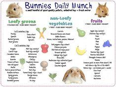 25 Trendy Pet Rabbit Names Baby Bunnies Pet Bunny Rabbits, Pet Rabbit, Mini Lop Rabbit, Rabbit Toys, House Rabbit, Rabbit Litter, Mini Lop Bunnies, Holland Lop Bunnies, Lionhead Rabbit