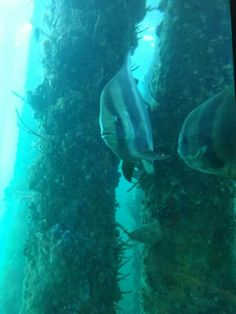 Busselton underwater observatory Light Spring, Western Australia, Underwater, Westerns, Pets, Animals, Animaux, Animal, Animales